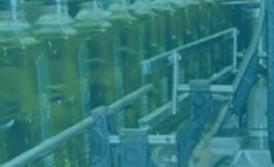 Maquinaria aceite de oliva